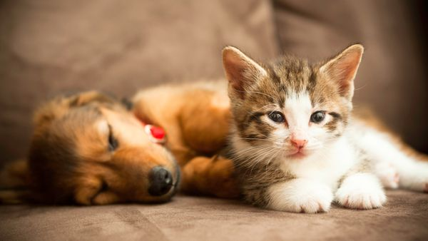 The true cost of owning a dog or cat means having pets on the couch